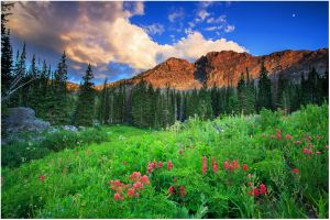 Indian Paintbrush and Evening Light copy.jpg